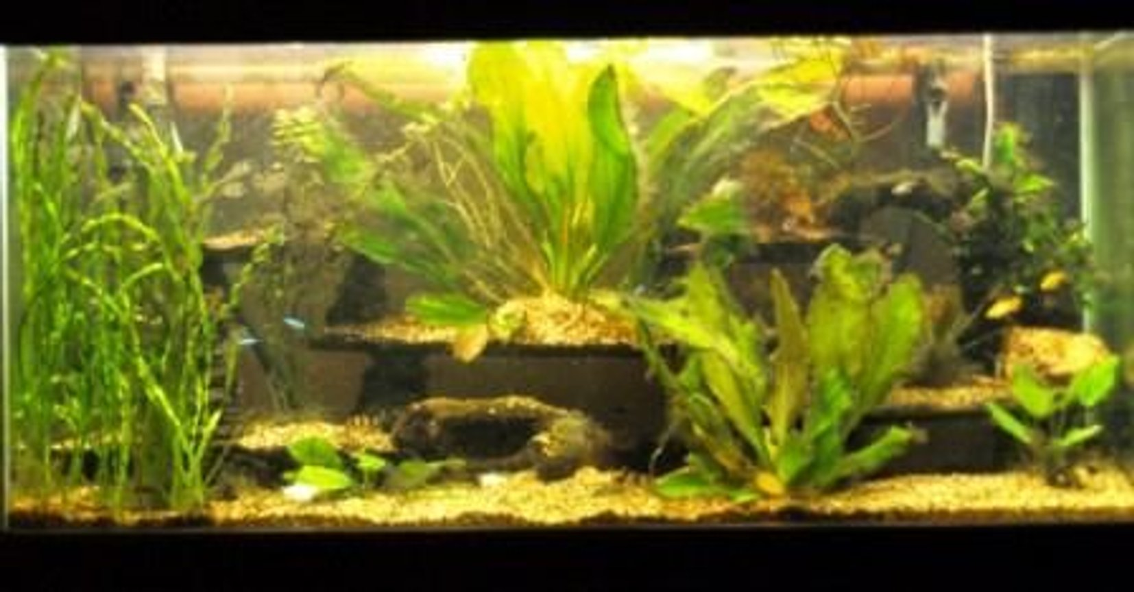 80 gallons planted tank (mostly live plants and fish) - 80 gallon low tech tank
