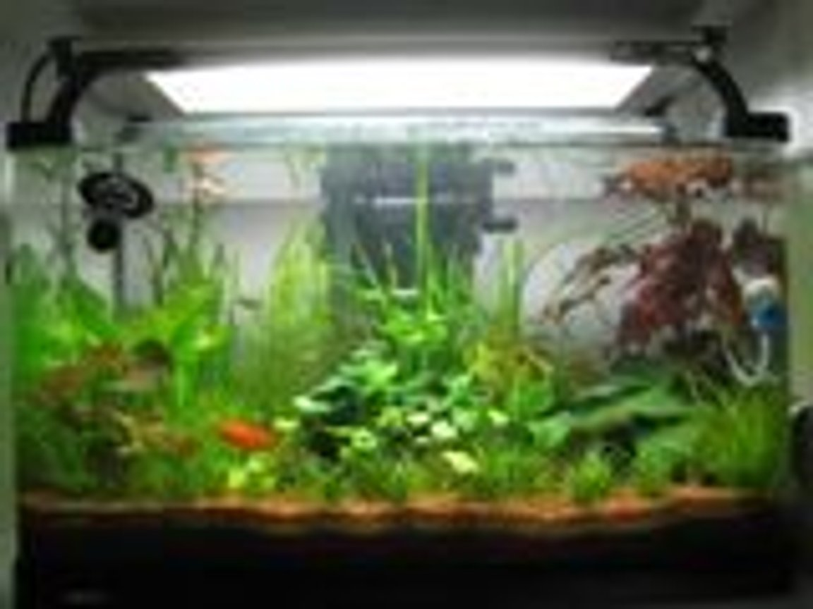 15 gallons planted tank (mostly live plants and fish) - nice forest..