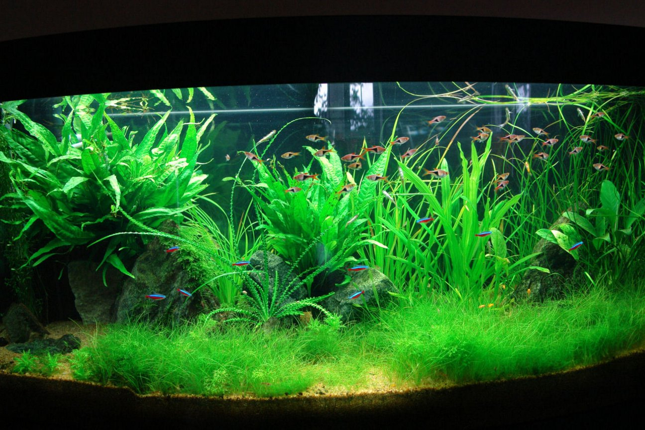 64 gallons planted tank (mostly live plants and fish) - planted tank