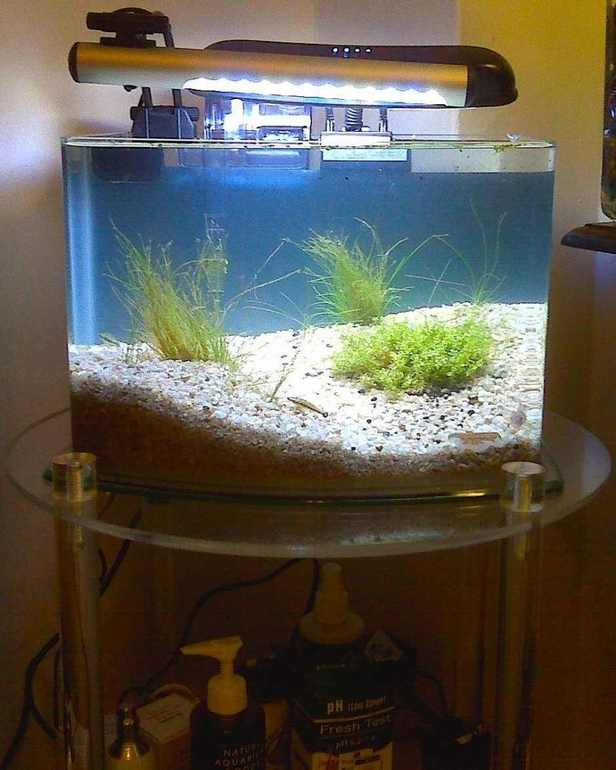 3 gallons planted tank (mostly live plants and fish) - 3-gallon Picotope with supplemental lighting