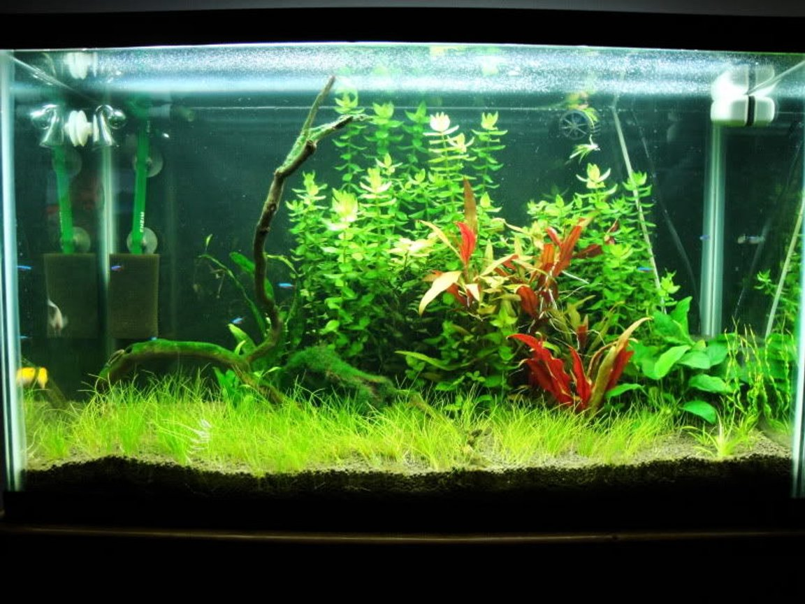 29 gallons planted tank (mostly live plants and fish) - FTS 7-29-09