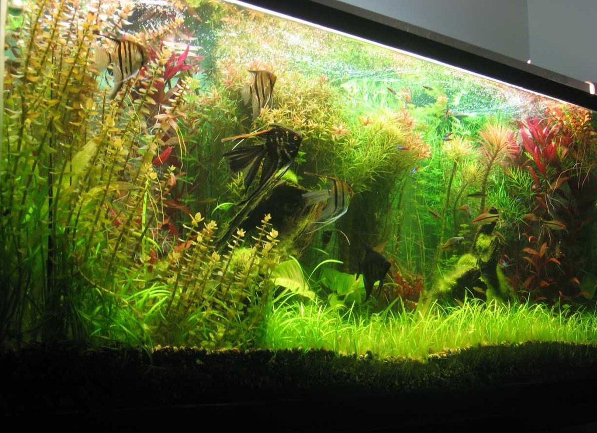 140 gallons planted tank (mostly live plants and fish) - 140 gallons