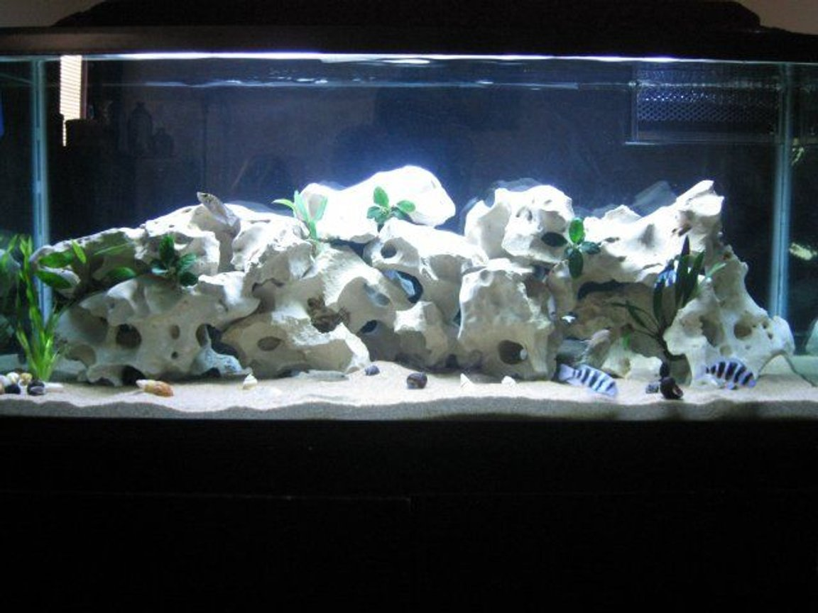 75 gallons planted tank (mostly live plants and fish) - Tanganyika Rift Lake Biotope 7 Anubias palnts 1 Vallisneria. Sand and Snail Substrate Holey Rock Decor