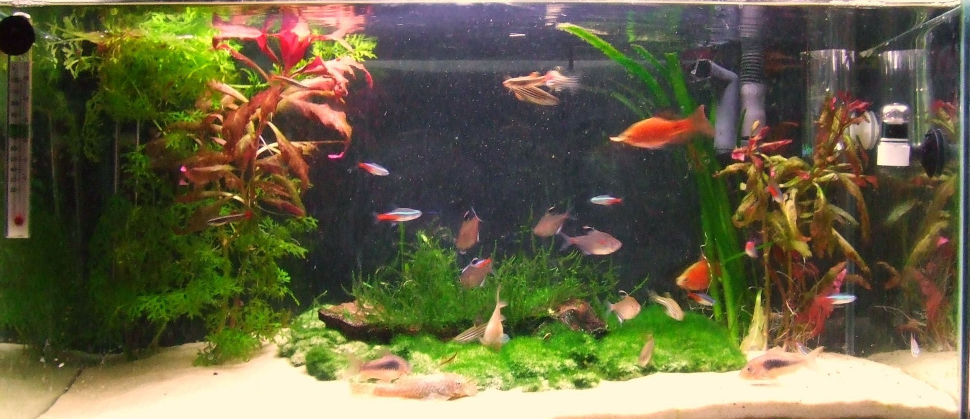 11 gallons planted tank (mostly live plants and fish) - My fish tank, Home to Over 30 fish :) Rate high :)