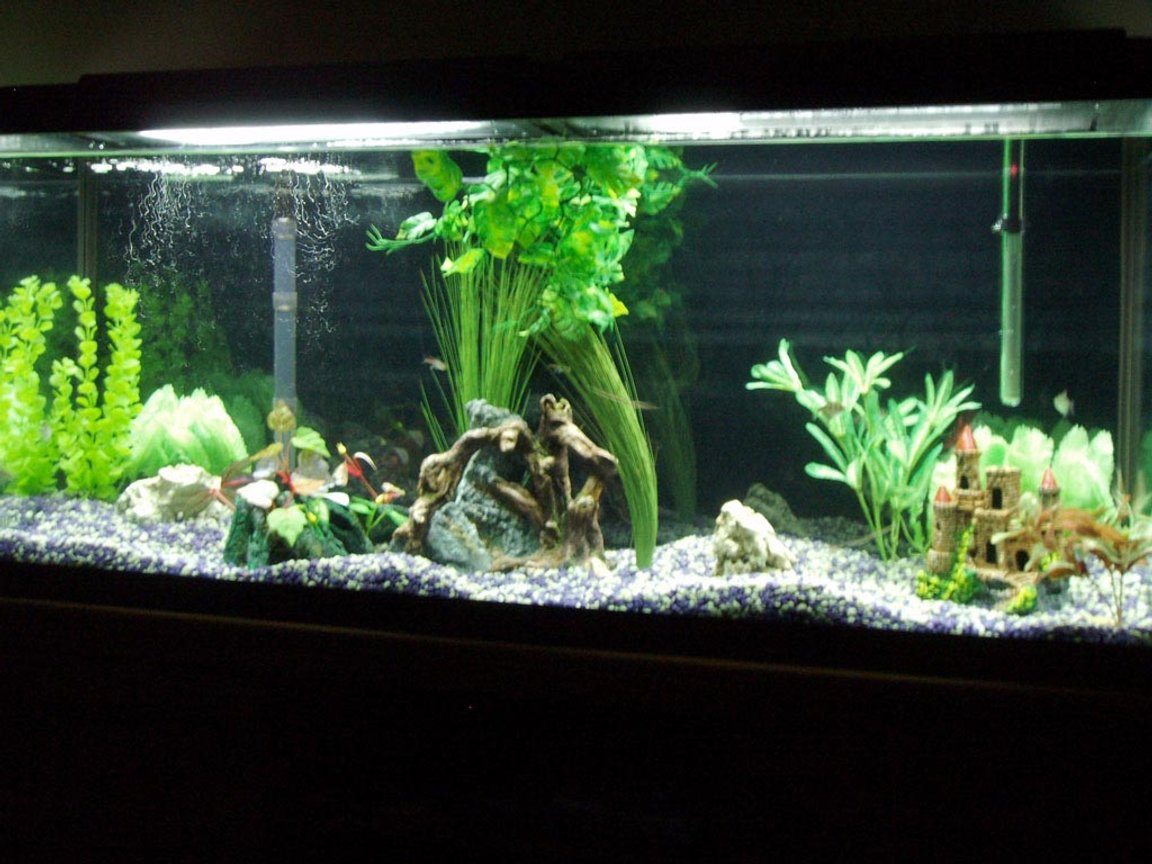 55 gallons planted tank (mostly live plants and fish) - Our First fish tank, hoping to add more plants very soon.