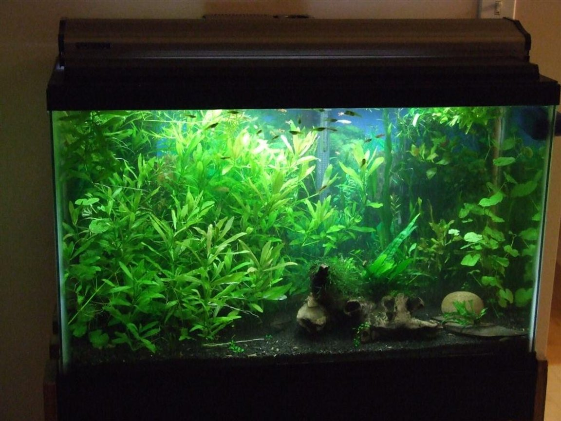 30 gallons planted tank (mostly live plants and fish) - 30 Gallon Planted Tank.
