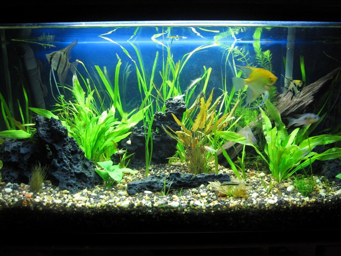40 gallons planted tank (mostly live plants and fish) - my 40 gallon freshwater planted
