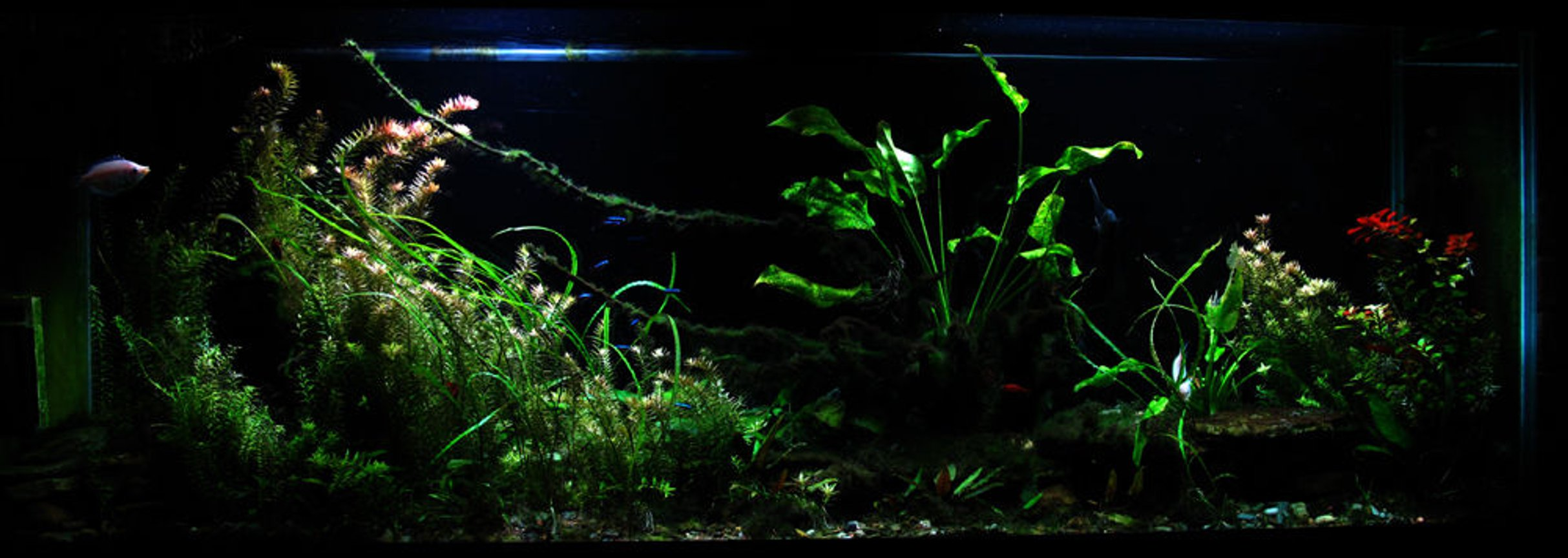 150 gallons planted tank (mostly live plants and fish) - 150 gallon freshwater planted