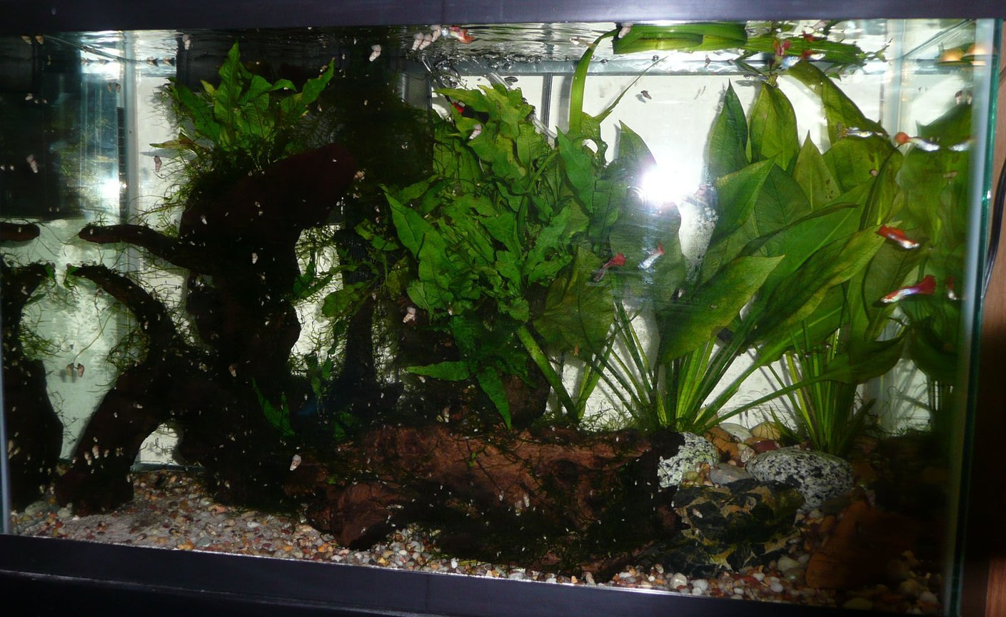 29 gallons planted tank (mostly live plants and fish) - tank 1