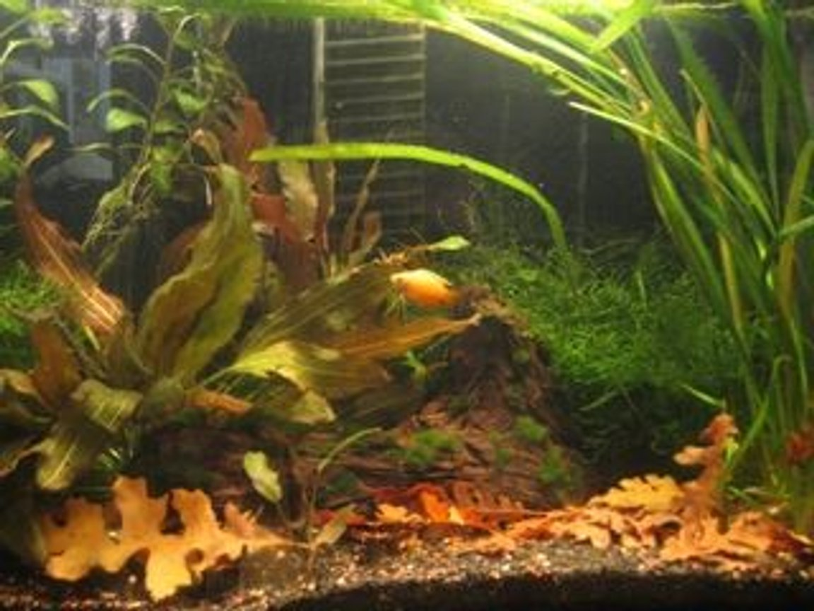 55 gallons planted tank (mostly live plants and fish) - 30 gallon planted