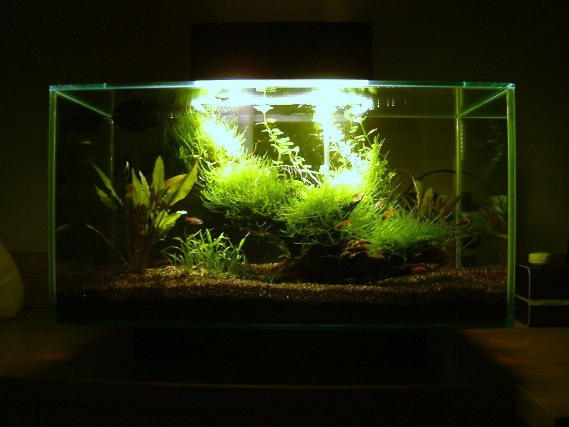 6 gallons planted tank (mostly live plants and fish) - Planted Fluval EDGE Nano Aquarium