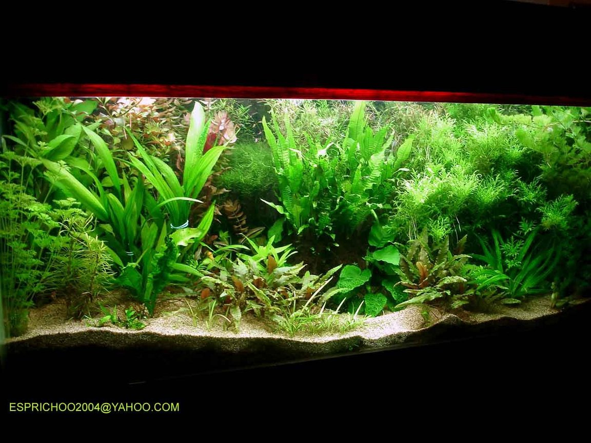 140 gallons planted tank (mostly live plants and fish) - fish paradise