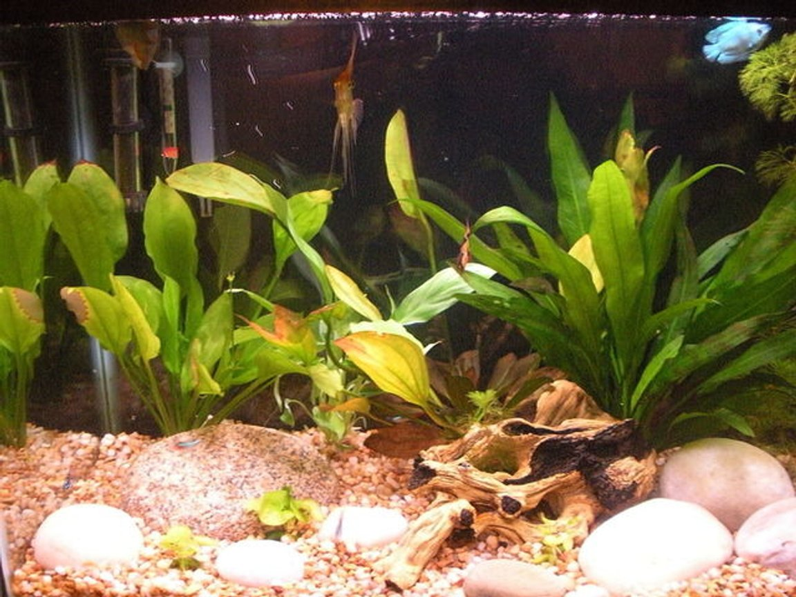 29 gallons planted tank (mostly live plants and fish) - My planted community tank.