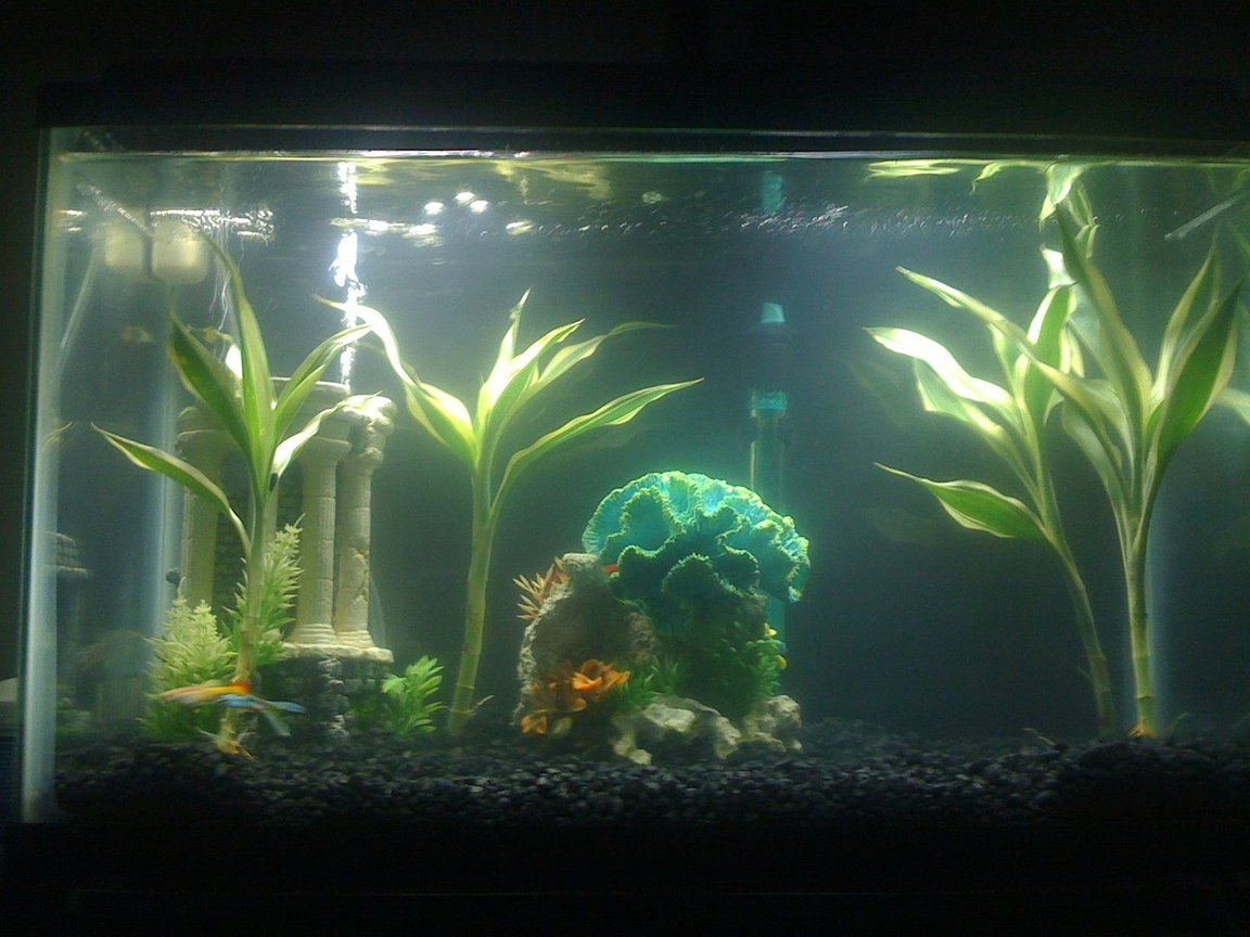 36 gallons planted tank (mostly live plants and fish) - This is my first fish tank, a ten gallon one. It is two weeks old, and pretty much a clean slate, I am looking for suggestions of where to go from here...