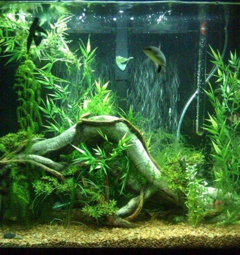 40 gallons planted tank (mostly live plants and fish) - just started adding live plants