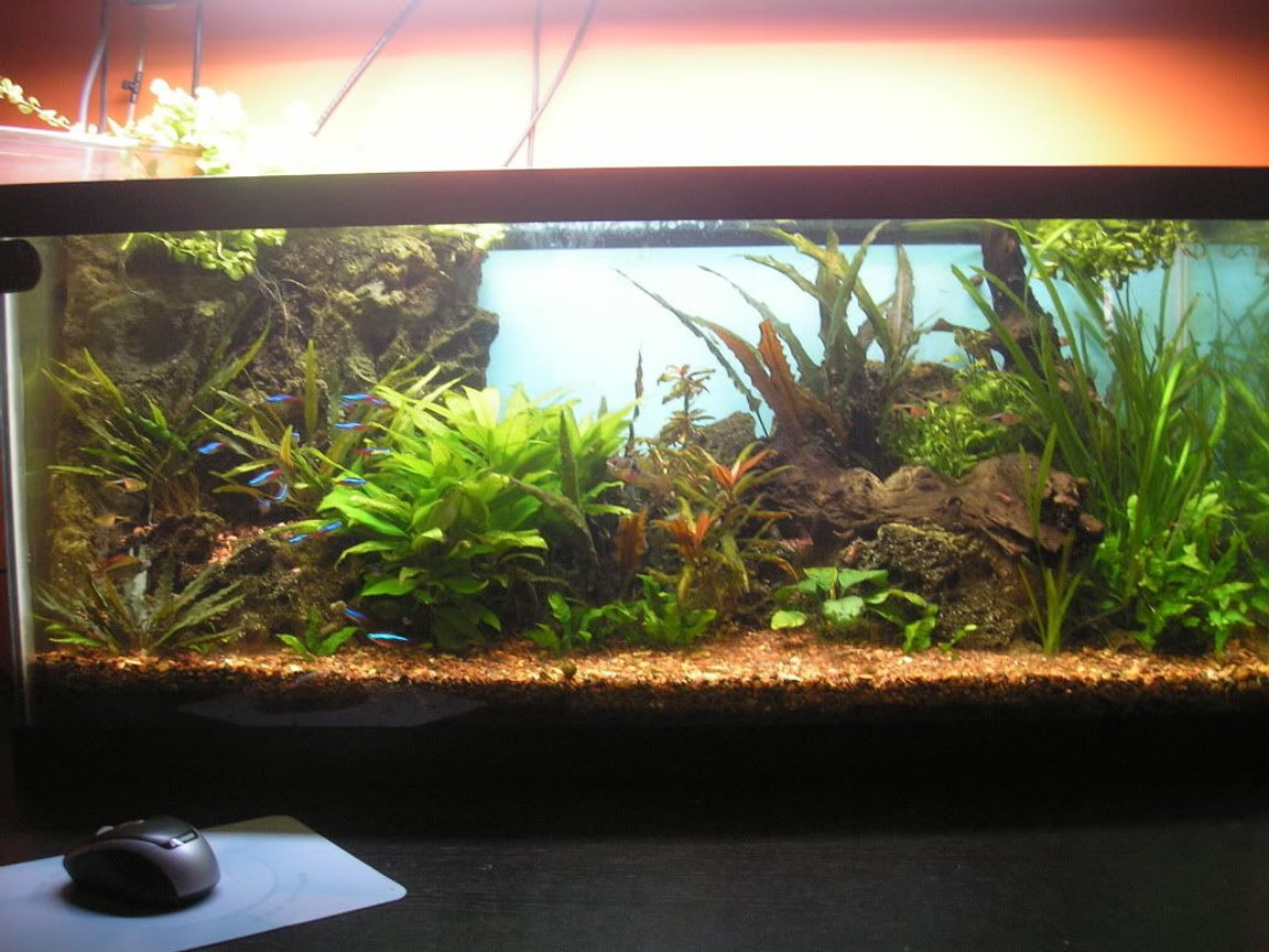 70 gallons planted tank (mostly live plants and fish) - The 30 gallon tank