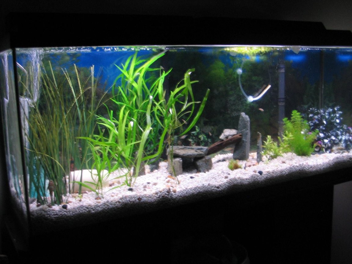 55 gallons planted tank (mostly live plants and fish) - just set up 5 weeks ago doing great