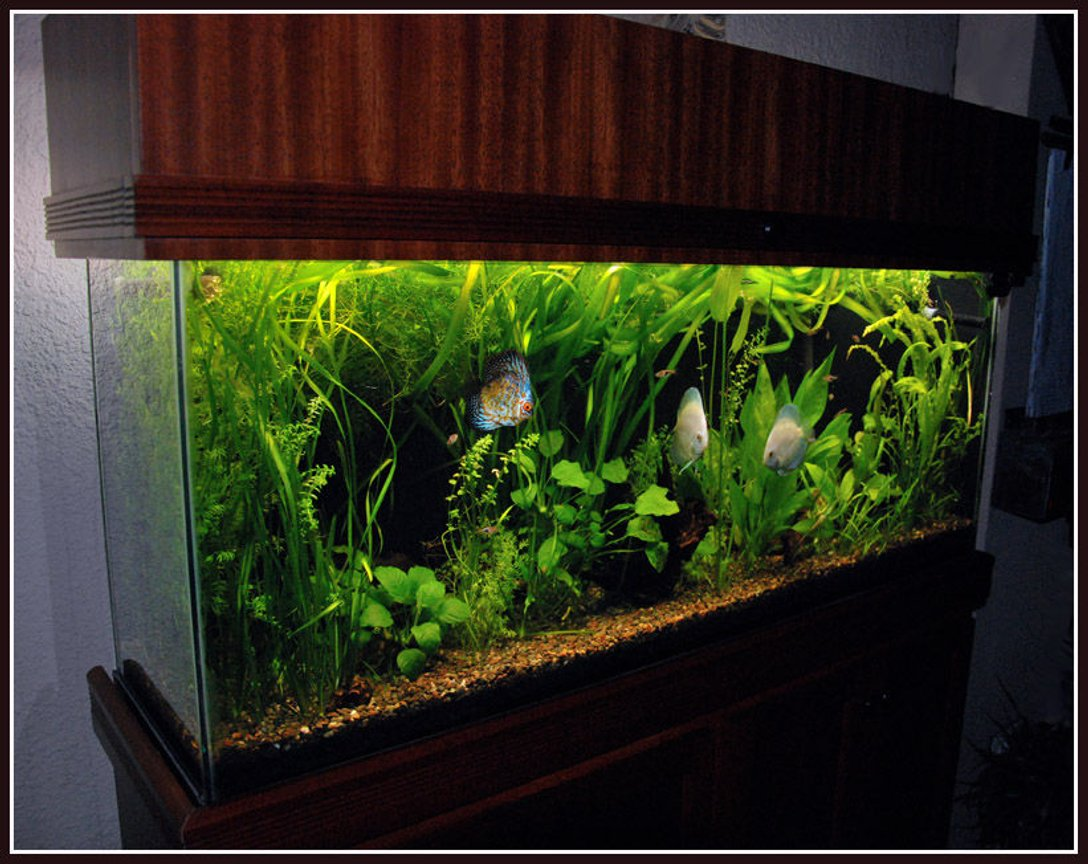 125 gallons planted tank (mostly live plants and fish) - 55 gallon planted aquarium with discus fish. Fluval 305, 4 - 40w T12 fluorescent tubes, 6,500K.