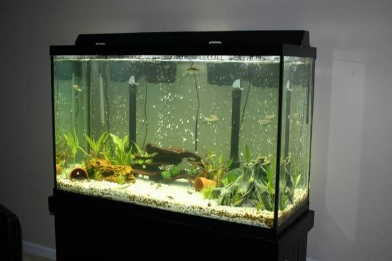 110 gallons planted tank (mostly live plants and fish) - A pic of my 110 gallon planted tank.