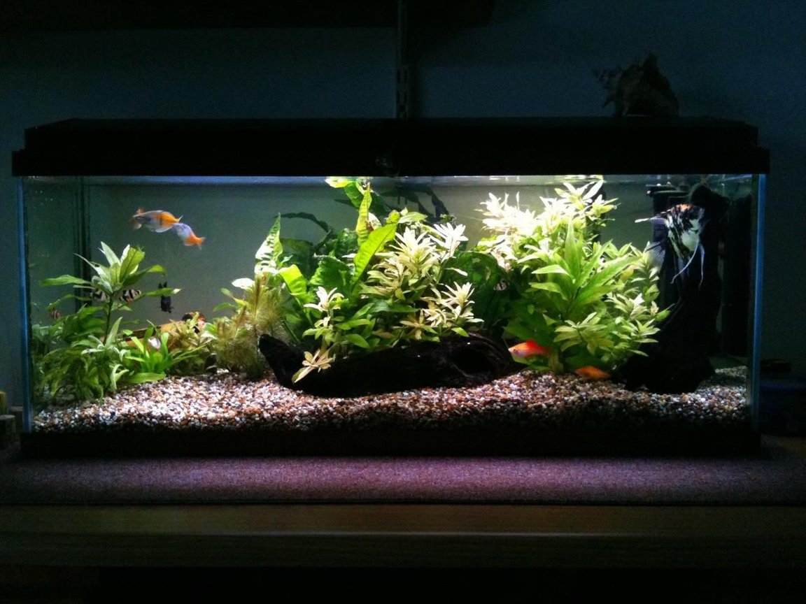 22 gallons planted tank (mostly live plants and fish) - My tank.