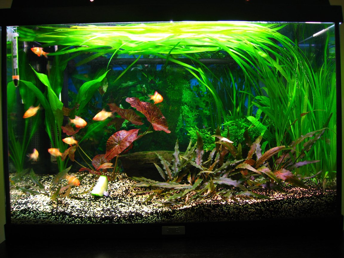 18 gallons planted tank (mostly live plants and fish) - About 1 year old tank. Courgette is for food, not a plant :-D