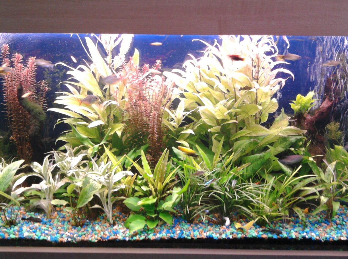 75 gallons planted tank (mostly live plants and fish) - All live plants with lots of fish.