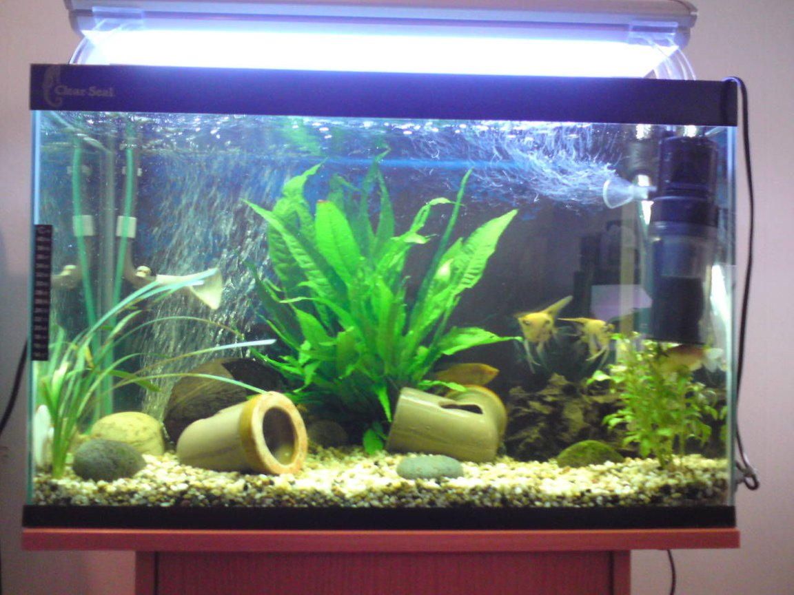 28 gallons planted tank (mostly live plants and fish) - sarah's tank