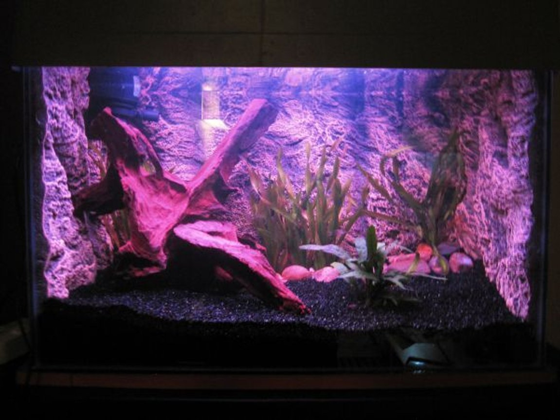 20 gallons planted tank (mostly live plants and fish) - 20 gallon tank, powerhead tofilter box and 15w red fluorescent