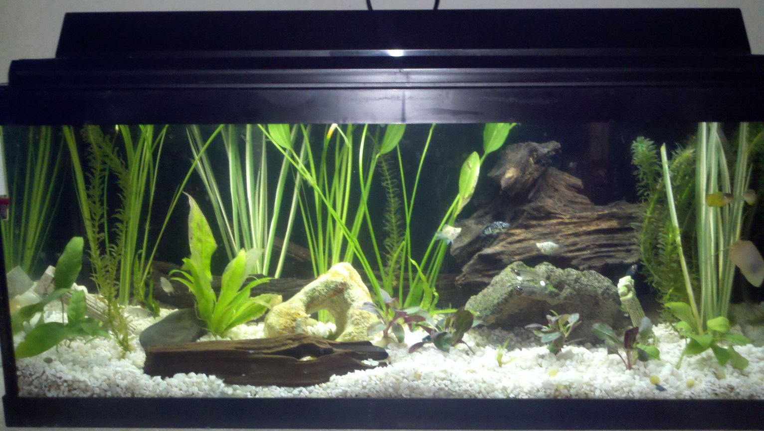 20 gallons planted tank (mostly live plants and fish) - all live plants(17 total) and fish(5 glass catfish, 2 yellow khili fish, 2 small red bellied newts, 3 snails, 1 small albino plecostamous, 3 white balloon mollys, 2 black/white speckled mollys, multiple ghost shrimp), 5 driftwood peices