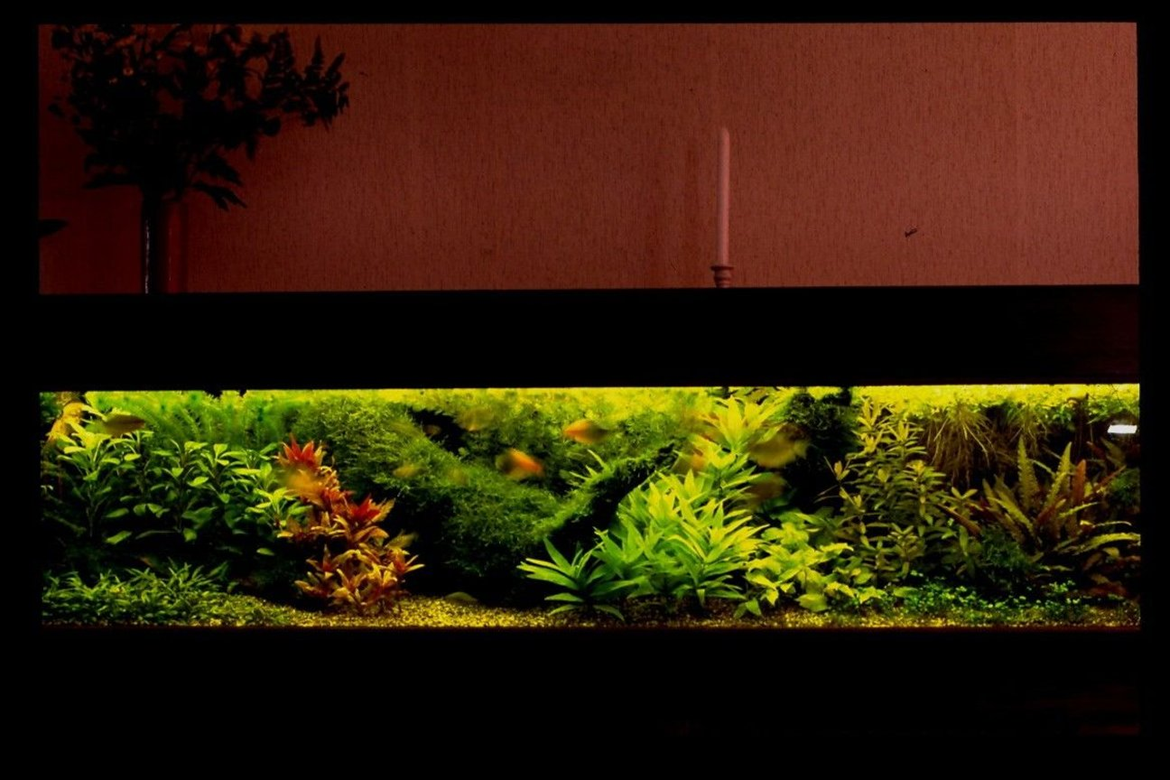 500 gallons planted tank (mostly live plants and fish) - composition of plants are important