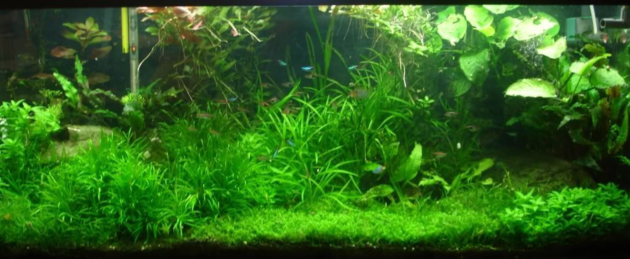 75 gallons planted tank (mostly live plants and fish) - 75G Pressurized CO2 tank, DIY CO2 reactor, 216 Watts 108W T5HO 8hrs per day 216 watt 1 hr per day, PH controller for CO2 management
