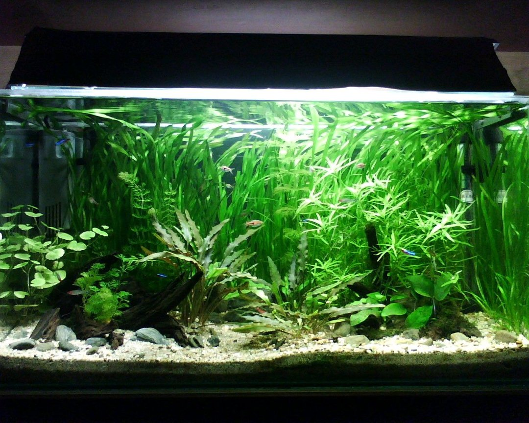20 gallons planted tank (mostly live plants and fish) - My first fish tank.