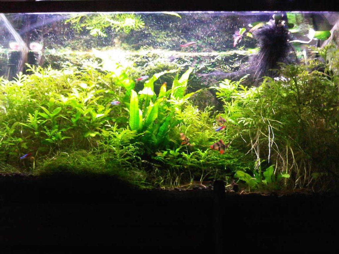 29 gallons planted tank (mostly live plants and fish) - my tank