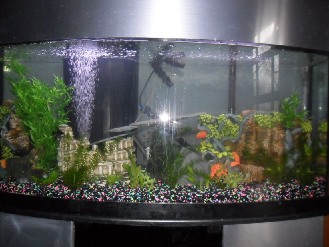 80 gallons planted tank (mostly live plants and fish) - My 80 gallon setup misc convicts and live plants Pic is not the best ill try for another one soon