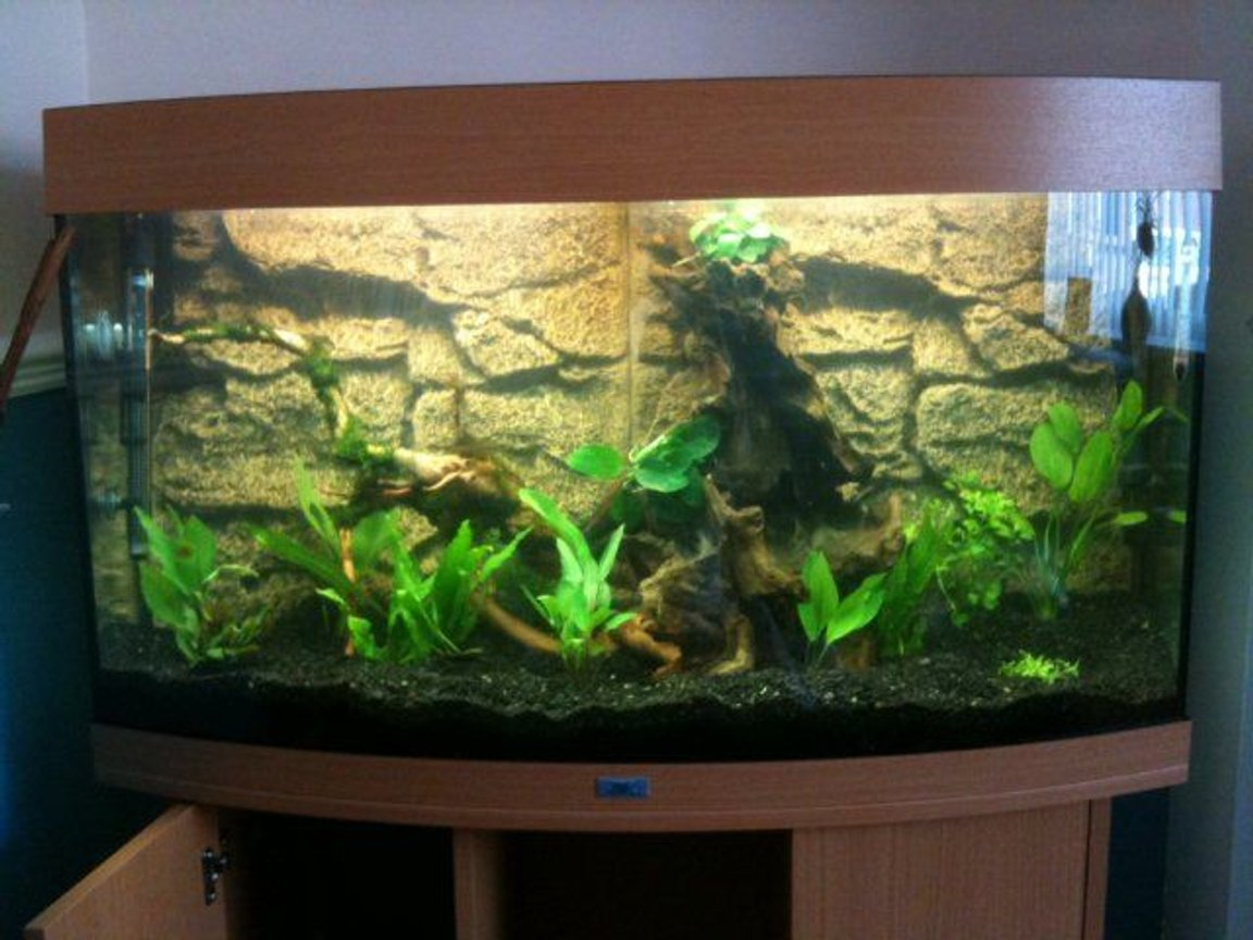 180 gallons planted tank (mostly live plants and fish) - ...a pic before any fish were added. Hav a few more plants now too...