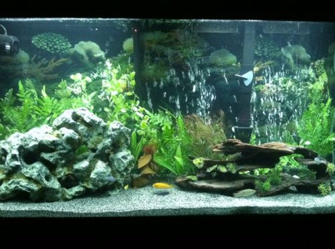 60 gallons planted tank (mostly live plants and fish) - More of cichlid tank