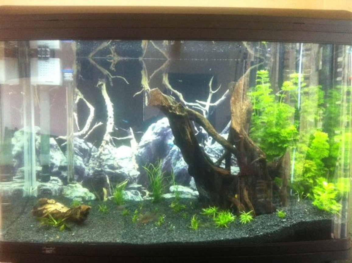 65 gallons planted tank (mostly live plants and fish) - Aqua One 980T Trying to replicate a South American Clearwater stream!! Help wanted :)