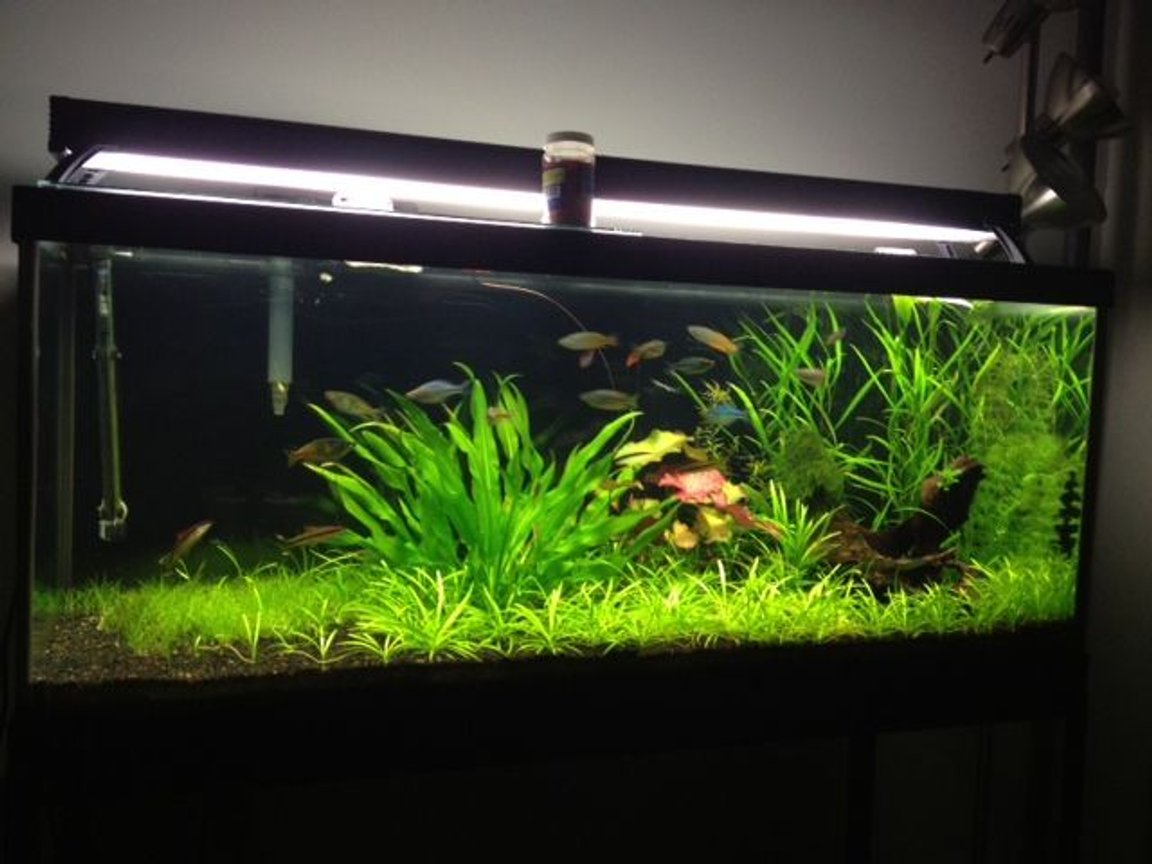 75 gallons planted tank (mostly live plants and fish) - My rainbowfish planted aquarium on youtube at zakartaz