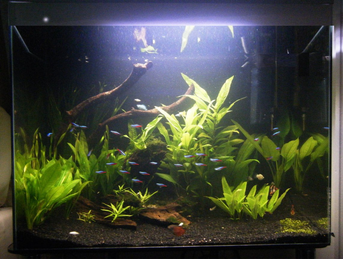 50 gallons planted tank (mostly live plants and fish) - my tank after a bit more remodeling :)