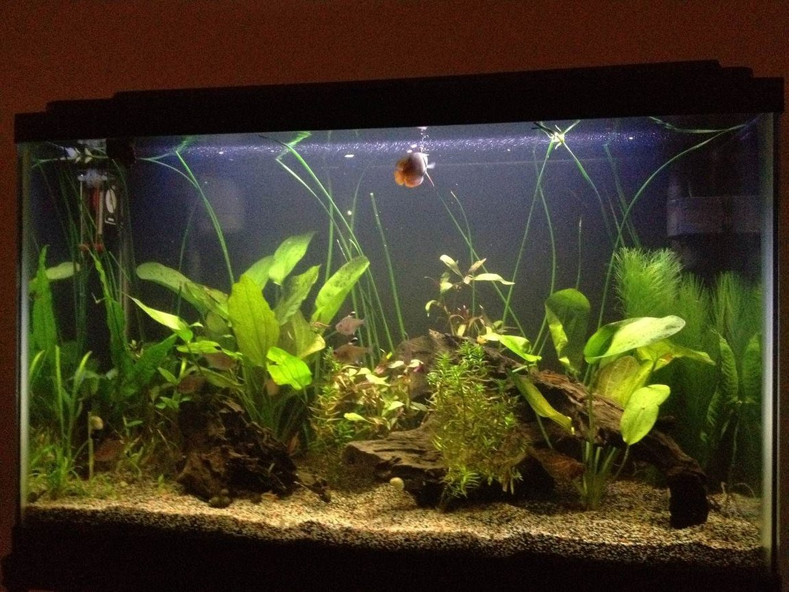 29 gallons planted tank (mostly live plants and fish) - Just a quick picture. See the Gourami up top and several of the Tetras near the middle.
