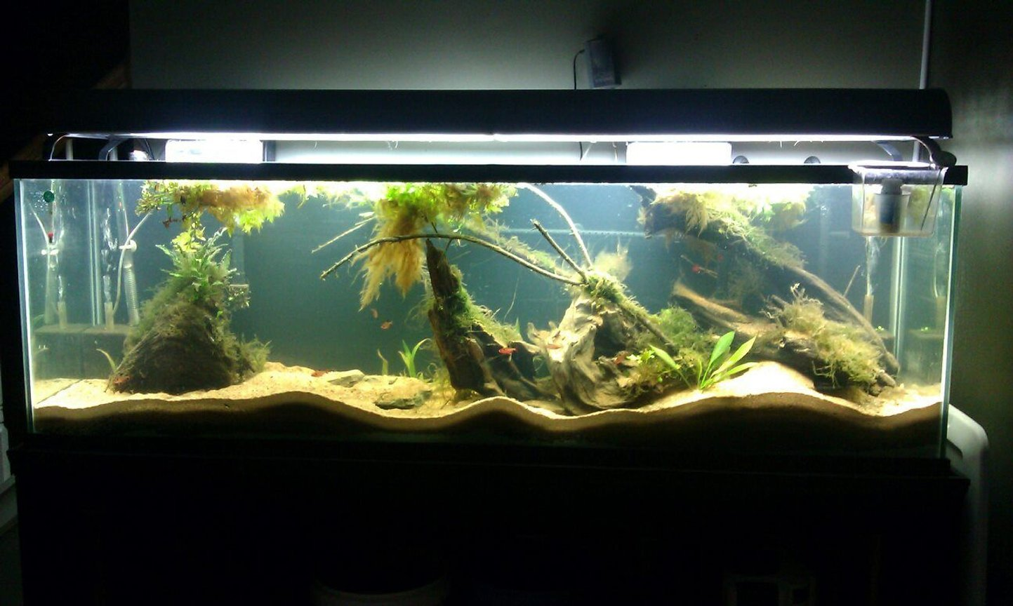 125 gallons planted tank (mostly live plants and fish) - Newly setup Amazon 125 Gallon. It was just setup on 9/11/12.