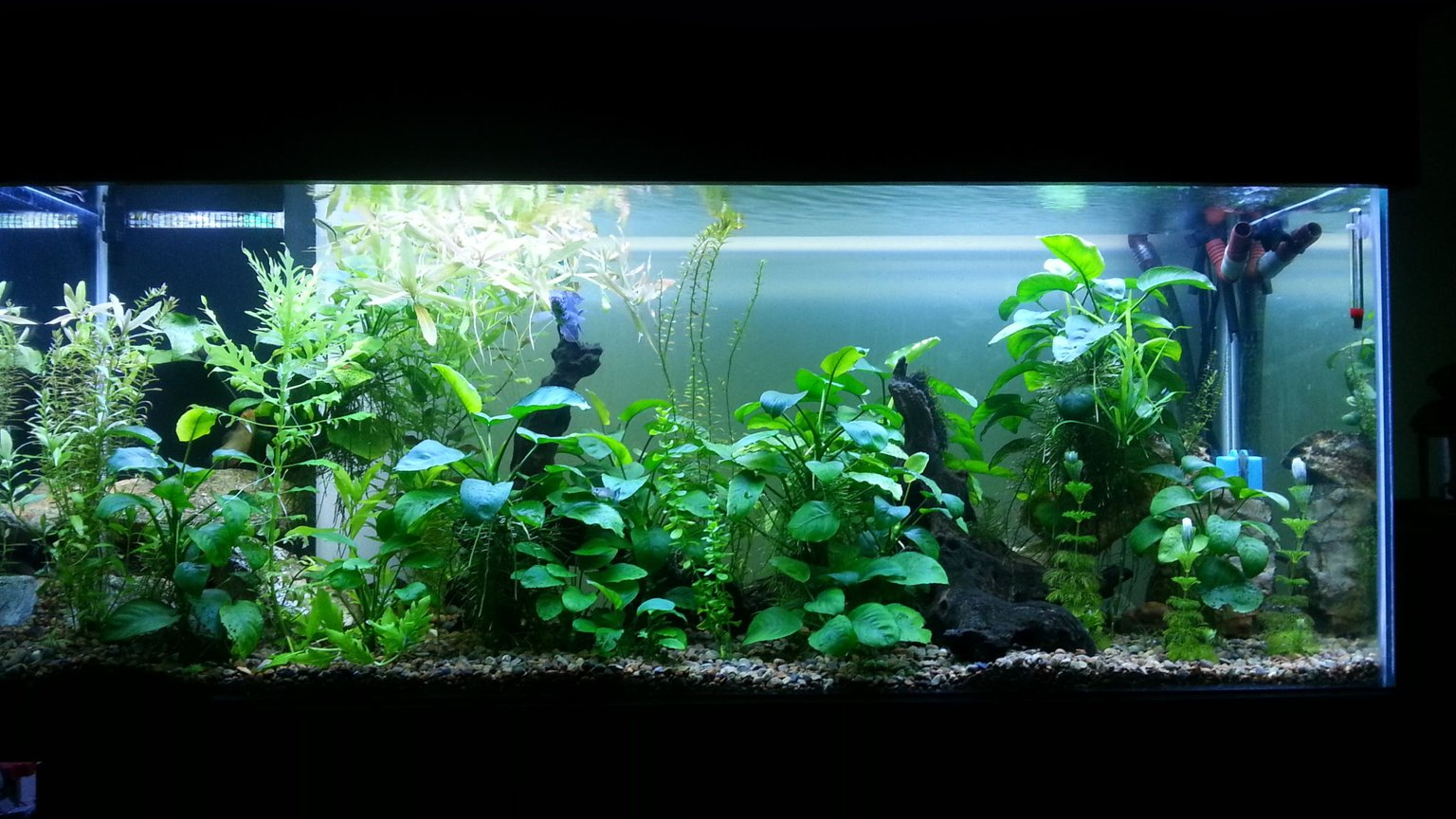 250 gallons planted tank (mostly live plants and fish) - Co2 Planted tank