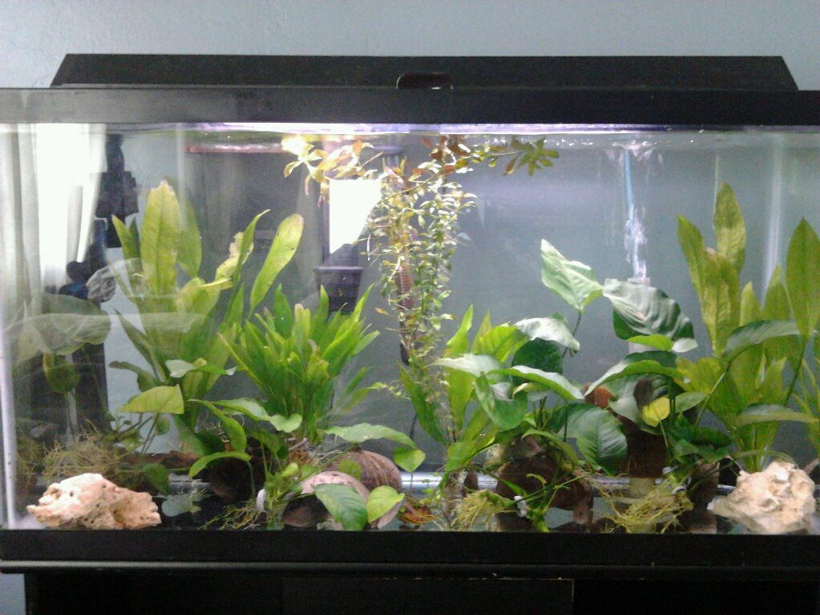 40 gallons planted tank (mostly live plants and fish)