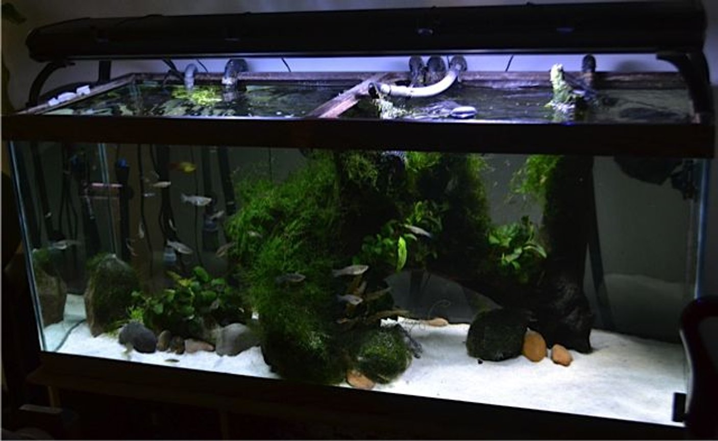 70 gallons planted tank (mostly live plants and fish) - established 2008
