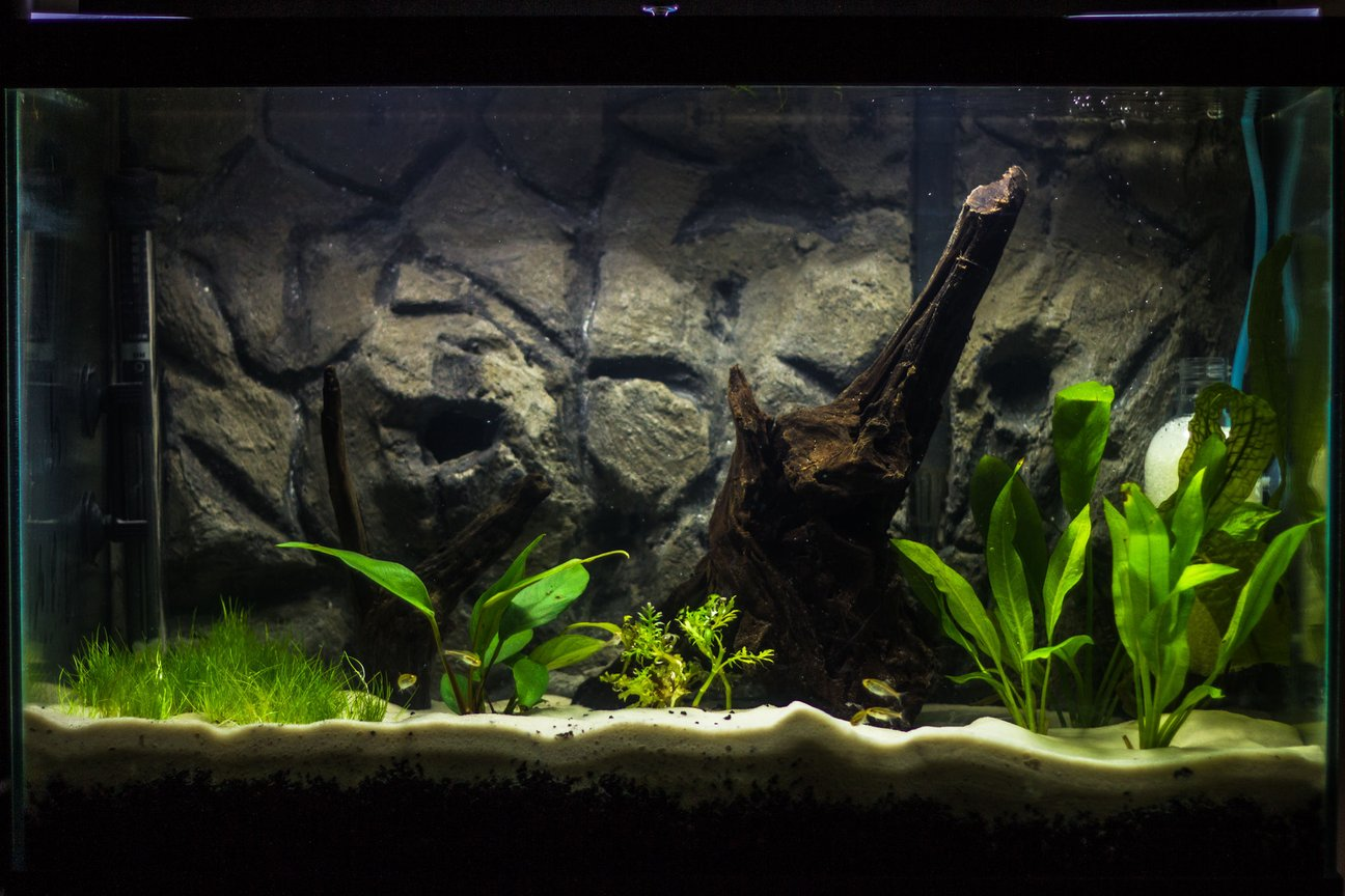 20 gallons planted tank (mostly live plants and fish) - I have been working on this tank step by step for several weeks now, and it is finally starting to take shape. It is a 20 gallon tall, with a homemade 3D cement background. I am using Eco-Complete for my bottom substrate (1.5 inches), topped with Quikrete Medium Commercial Grade sand (1.5 inches). After all the decorations, substrate, and background, the tank fills at 13-14 gallons. I'm running an Aquaclear 50 HOB filter, with peat-moss added in the filtration system to bring down my pH. I've equipped an ViaAqua 100-Watt Quartz Glass heater, set to about 78 F. I've decorated with Malaysian drift wood as my centerpiece, with a second piece of smaller driftwood from my LFS. I built my own CO2 injector, powered by Yeast and a sugar water mixture for food. I anticipate the mixture to supply about 2 weeks of CO2 per batch. I am ultimately designing this tank for German Blue Rams, living along side of Neon and Glowlight Tetras, and Nerite Snails, but I am taking it step by step slowly, as GBR's are very sensitive to water parameters and I want the tank to be perfect for them.