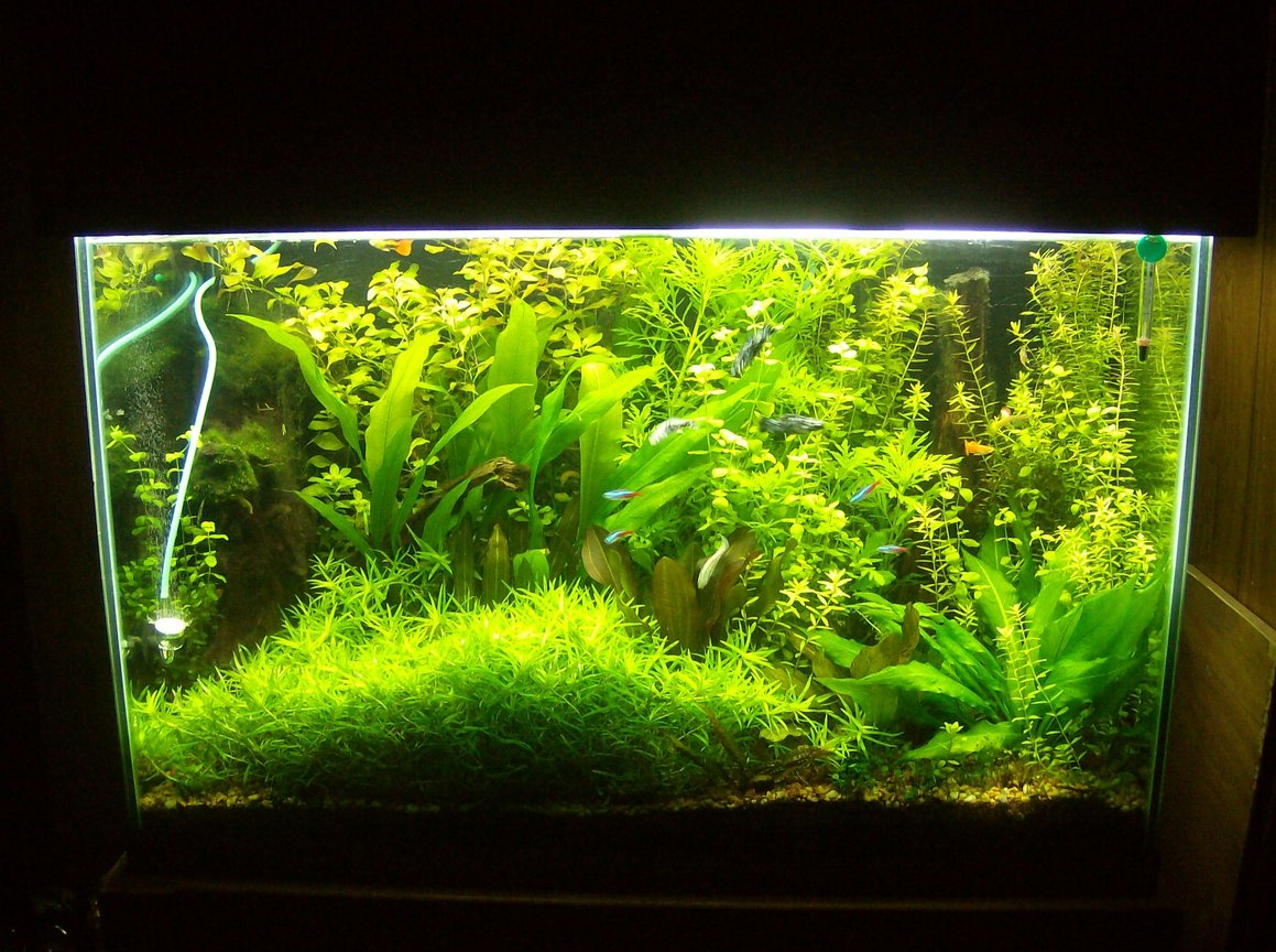 70 gallons planted tank (mostly live plants and fish) - 9/13 last pic before new setup added injected co2