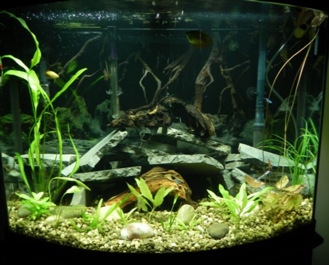 36 gallons planted tank (mostly live plants and fish) - Upgraded to 36 gal bowfront. Currently have 3 dwarf gouramies, 2 honey gouramies, 5 neon tetras, 2 otos, 3 emerald cory cats and a yellow mystery snail. Plants are aponogeton, water lilly, compacta, koyoto, and argentine sword
