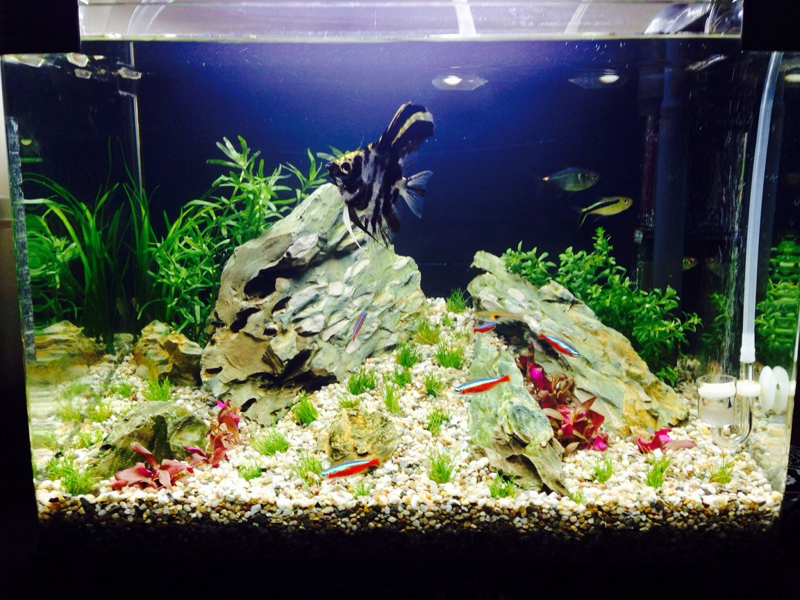 10 gallons planted tank (mostly live plants and fish) - Newly planted tank fingers crossed