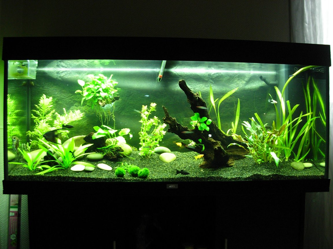 63 gallons planted tank (mostly live plants and fish) - 63 gallons plantes tank