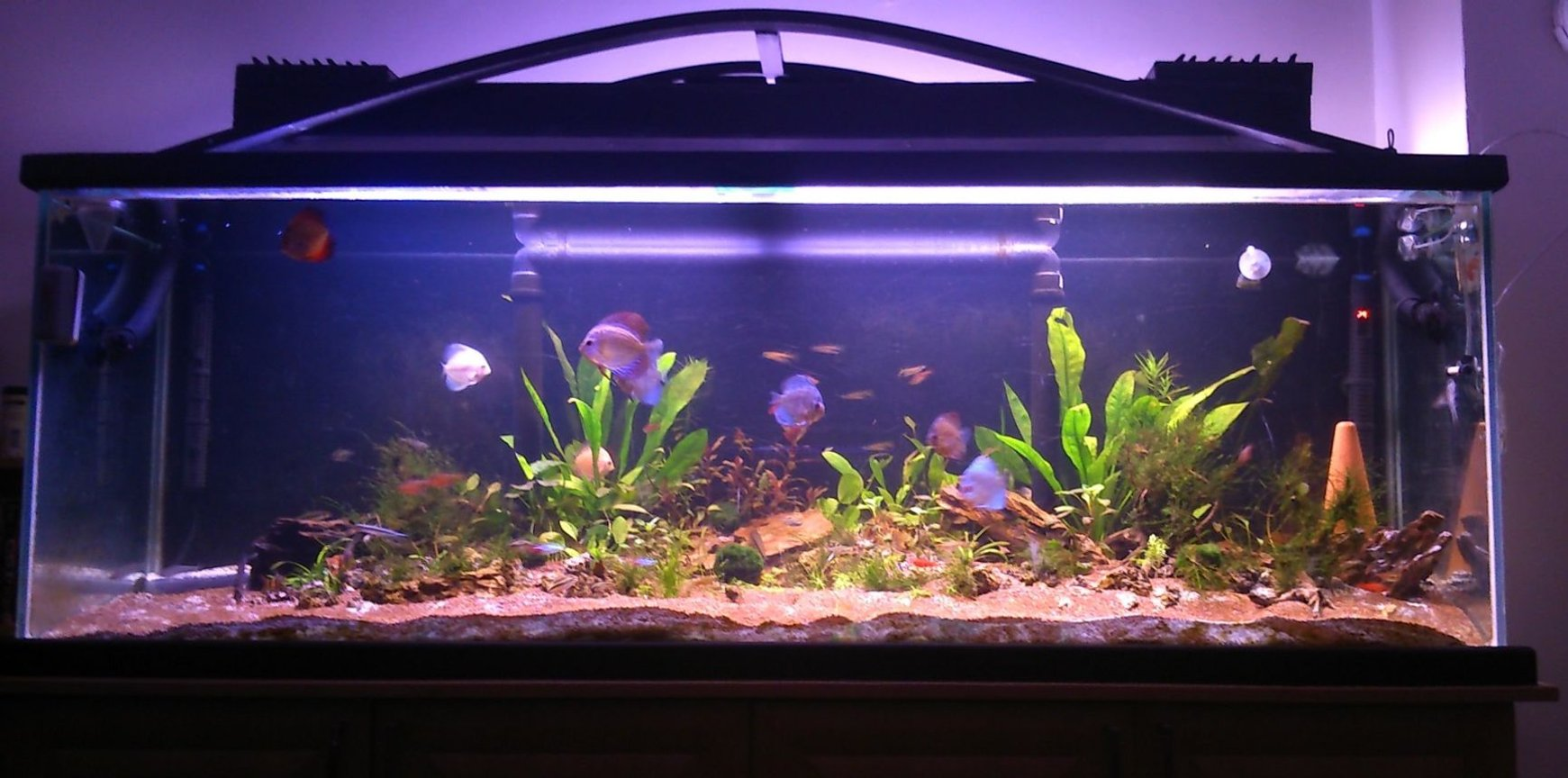 130 gallons planted tank (mostly live plants and fish) - tank after 2 months